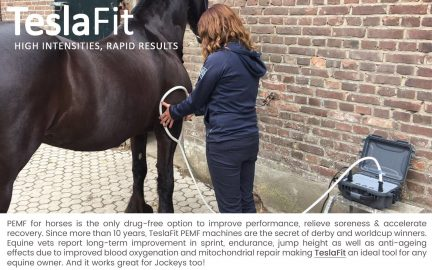 pemf therapy for equines