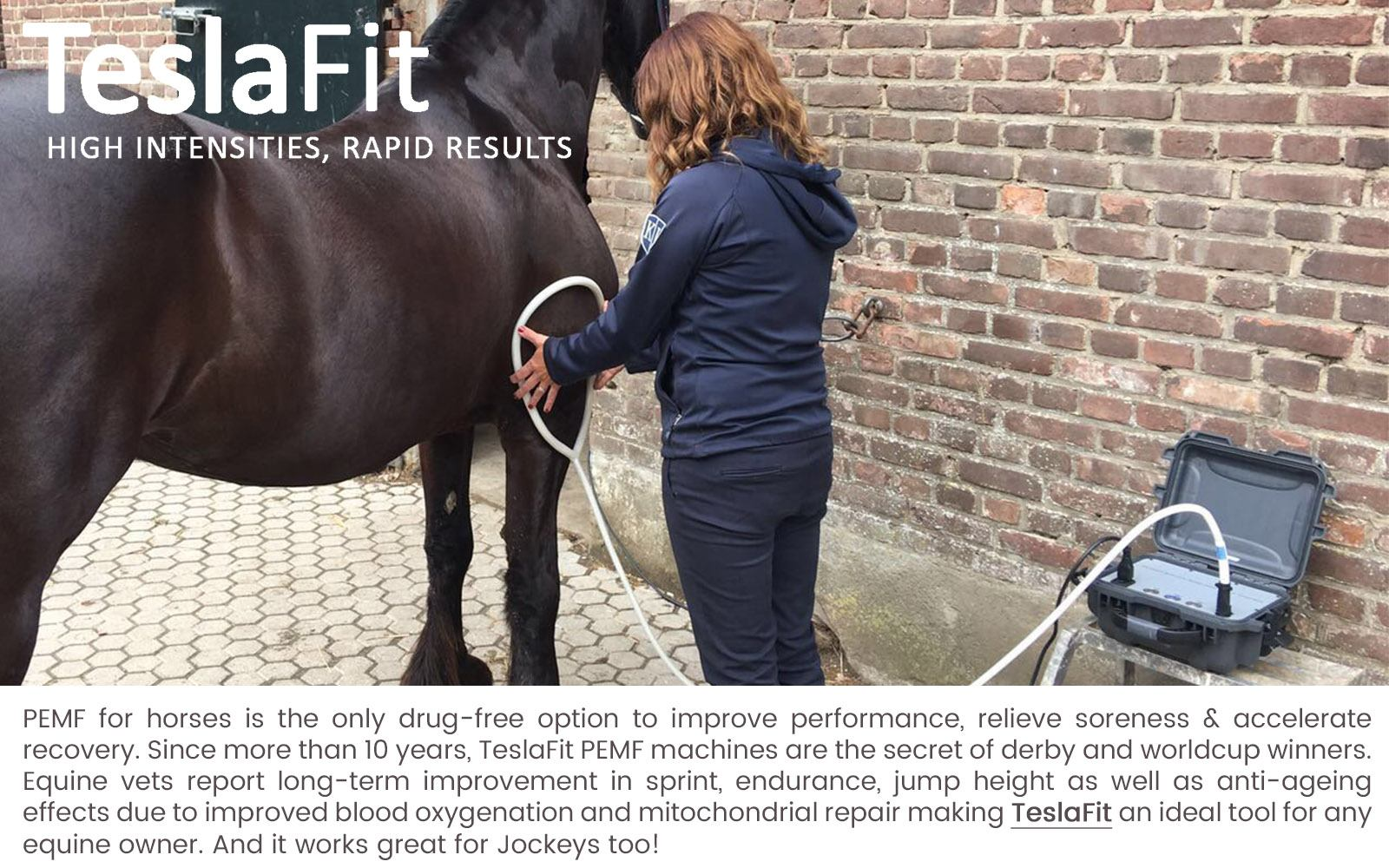 PEMF therapy for Equines - TeslaFit PEMF